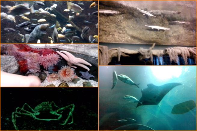 20130511 Aquarium 04