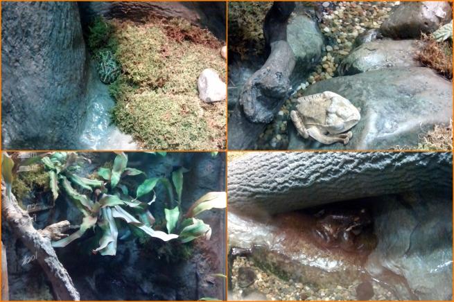 20130511 Aquarium 05