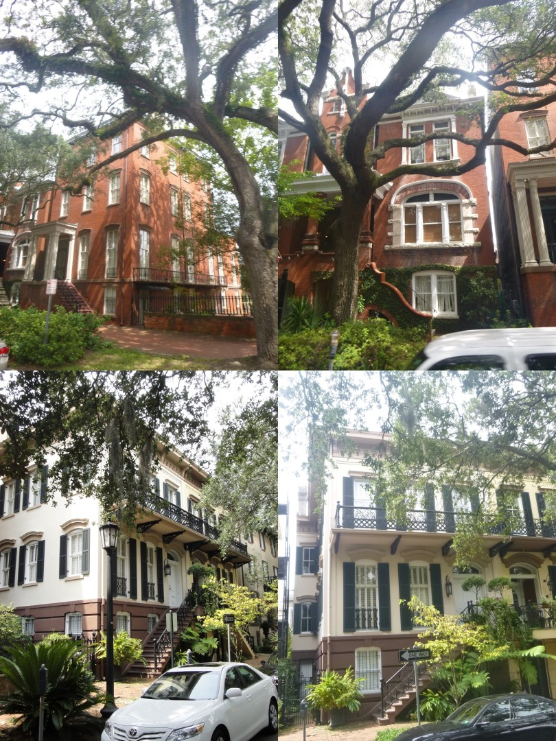 Savannah-Views (20)-tile (Large)