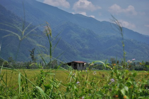 Hut in the Mids of Rice Fields